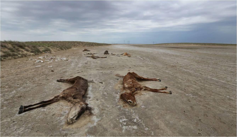 Құлан түзде лажсыз өлімтікке айналған Қамбар баласы. Маңғыстаудағы мал қырғыны әлемдік БАҚ назарын аудартты. Фото: Reuters / Pavel Mikheyev